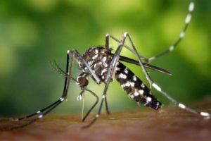 zika cordoba